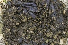 Fermez-vous vers le haut de la bouse de vache sèche sur l'herbe verte, engrais de compost chié pour l'environnement, fond de text photo stock