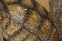 Fermez-vous vers le haut de la carapace de tortue photos libres de droits