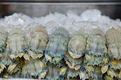 Fermez-vous vers le haut de la crevette de mante Photo stock