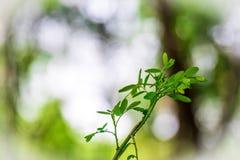Fermez-vous vers le haut de la feuille sur le fond trouble de bokeh d'arbre dans le jardin feuille dans un domaine avec des feuil Photos stock