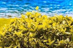 Fermez-vous vers le haut de la feuille verte sur le fond trouble de bokeh d'arbre dans le jardin de la feuille de forêt dans un d Photo stock