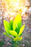 Fermez-vous vers le haut de la feuille verte sur le fond trouble de bokeh d'arbre dans le jardin de la feuille de forêt dans un d Image stock