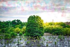 Fermez-vous vers le haut de la feuille verte sur le fond trouble de bokeh d'arbre dans le jardin de la feuille de forêt dans un d Photos libres de droits