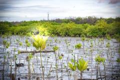 Fermez-vous vers le haut de la feuille verte sur le fond trouble de bokeh d'arbre dans le jardin de la feuille de forêt dans un d Photographie stock