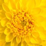 Fermez-vous vers le haut de la fleur Images libres de droits