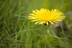 Fermez-vous vers le haut de la fleur avec l'herbe verte Photo stock