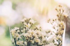 Fermez-vous vers le haut de la fleur blanche de Gypsophila de bouquet avec la lumière du soleil Photographie stock