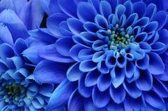 Fermez-vous vers le haut de la fleur bleue Photos libres de droits