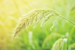 Fermez-vous vers le haut de la fleur d'herbe Photographie stock
