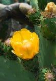 Fermez-vous vers le haut de la fleur de cactus Images stock