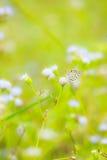Fermez-vous vers le haut de la fleur de l'herbe et du papillon Photo libre de droits