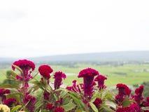 Fermez-vous vers le haut de la fleur et regardez le fond Photographie stock