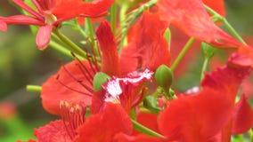 Fermez-vous vers le haut de la fleur naturelle sur l'arbre en ?t? Sun 4K, clip vid?o d'UHD clips vidéos