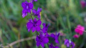 Fermez-vous vers le haut de la fleur pourprée Image libre de droits