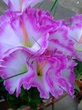 Fermez-vous vers le haut de la fleur violette Photos libres de droits