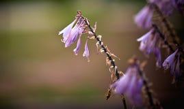Fermez-vous vers le haut de la fleur violette Le vent souffle un bouquet des fleurs dans le soleil ?galisant photos stock