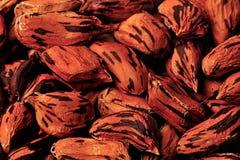 Fermez-vous vers le haut de la graine d'arachide de la Virginie Photos libres de droits