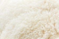 Fermez-vous vers le haut de la laine d'agneau Photographie stock libre de droits