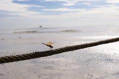Fermez-vous vers le haut de la libellule brune sur la corde, concept d'amour, perc de libellule Photographie stock libre de droits