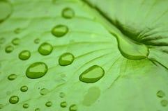 Fermez-vous vers le haut de la macro baisse superbe de l'eau de tir sur la feuille et la fleur Photo stock