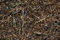 Fermez-vous vers le haut de la macro fourmilière Photographie stock libre de droits