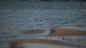 Fermez-vous vers le haut de la mer de côte Sable et petites vagues banque de vidéos