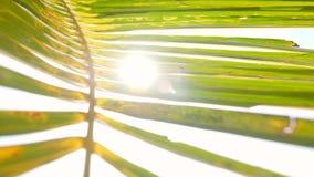 Fermez-vous vers le haut de la palmette verte de noix de coco contre Sun lumineux sur la plage de paradis Fond de vacances de vac banque de vidéos