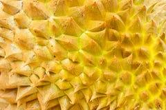 Fermez-vous vers le haut de la peau de durian Images stock