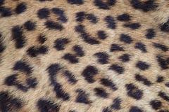 Fermez-vous vers le haut de la peau jaune de léopard photos libres de droits
