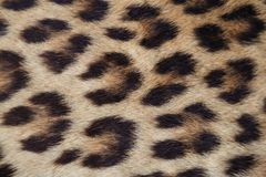 Fermez-vous vers le haut de la peau jaune de léopard Photos stock