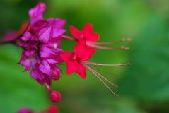 Fermez-vous vers le haut de la photo de belles fleurs roses vives de couleur Photographie stock libre de droits