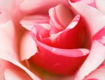 Fermez-vous vers le haut de la photo d'une rose Photographie stock