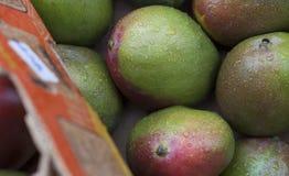Fermez-vous vers le haut de la photo des mangues avec de l'eau pluie au marché du ` s d'agriculteur Image stock