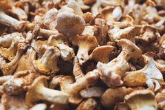 Fermez-vous vers le haut de la photo du boletus de champignon de forêt images stock