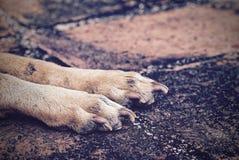 Fermez-vous vers le haut de la photo du clou et des jambes de chien Photographie stock