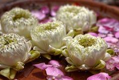 Fermez-vous vers le haut de la photo du lotus se pliant dans la cuvette de l'eau image stock