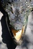 Fermez-vous vers le haut de la photo de la tête de crocodile Images libres de droits