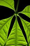 Fermez-vous vers le haut de la plante verte Images libres de droits