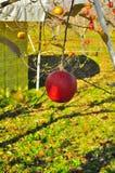 Fermez-vous vers le haut de la pomme sur l'arbre photo libre de droits