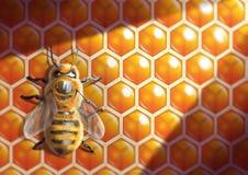fermez-vous vers le haut de la ruche Images libres de droits