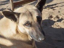 Fermez-vous vers le haut de la tête d'un chien Photo stock