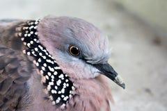 Fermez-vous vers le haut de la tête de l'oiseau dans souvent la lumière images libres de droits