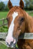 Fermez-vous vers le haut de la tête du ` s de cheval avec des mouches Photos libres de droits