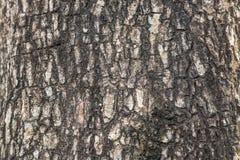 Fermez-vous vers le haut de la texture d'arbre Photos libres de droits
