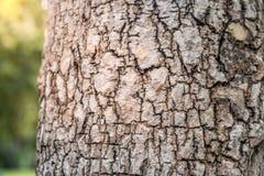 Fermez-vous vers le haut de la texture d'arbre Photographie stock libre de droits