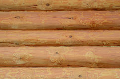 Fermez-vous vers le haut de la texture en bois Photographie stock libre de droits
