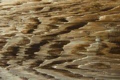 Fermez-vous vers le haut de la texture en bois rétro-dénommée Photos stock
