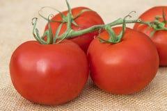 Fermez-vous vers le haut de la vue d'un groupe de tomates saines mûres fraîches de vigne Image stock
