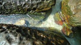 Fermez-vous vers le haut de la vue de l'eau claire débordante et ondulez autour de la pierre du lit de rivière boucle banque de vidéos