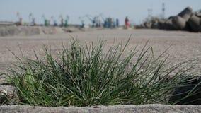 Fermez-vous vers le haut de la vue de l'herbe s'élevant sur le béton banque de vidéos
